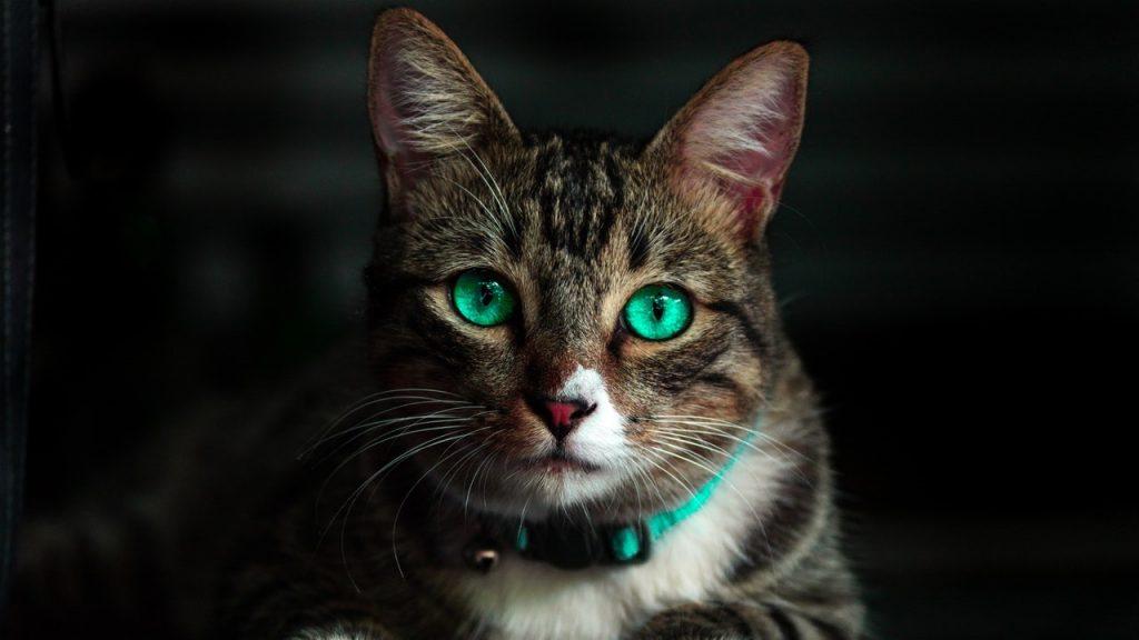 Deworming Cat
