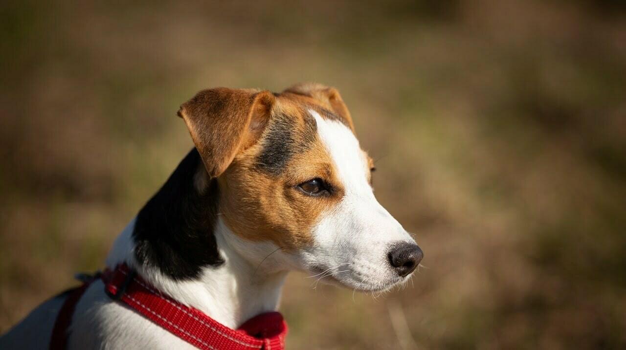 Hundsele bäst i test  2021 – hitta bästa hundselen här!