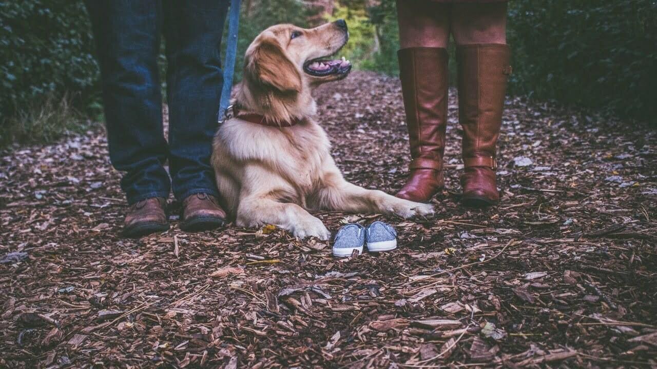 Hundskor bäst i test 2021 – hitta bästa hundskorna här!