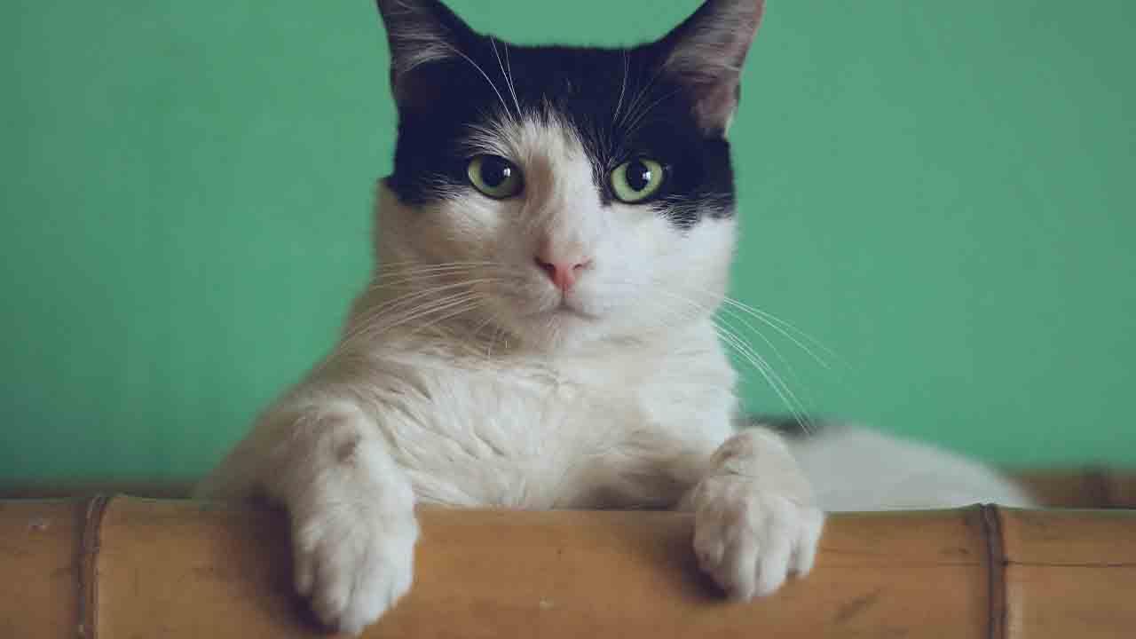 Kattlåda bäst i test 2021 – hitta bästa kattlådan här!