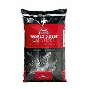 World's Best Kattsand Bäst