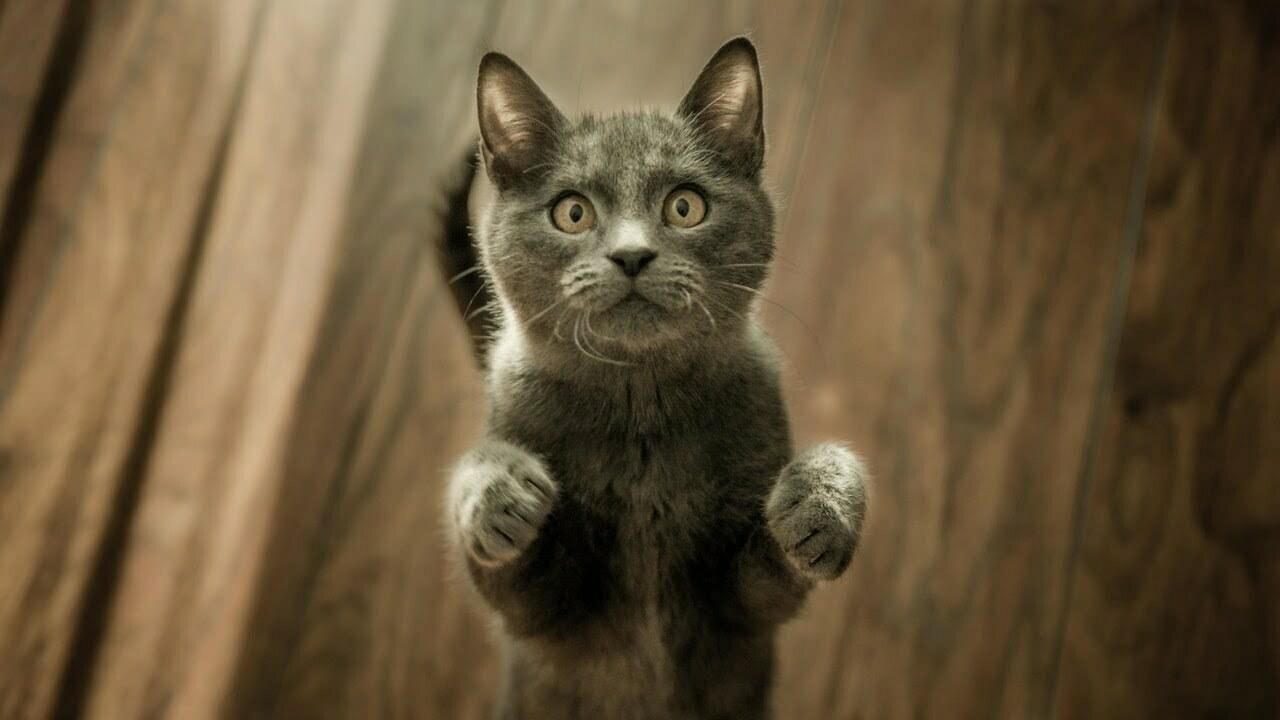 Kattsele bäst i test 2021 – hitta den bästa kattselen här!